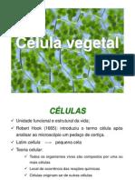 2ª AULA_ Célula Vegetal