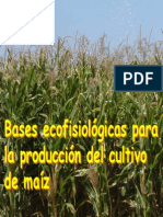 Ecofisiología maíz 2004