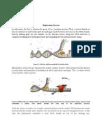 Replikasi (Genetika Molekular)