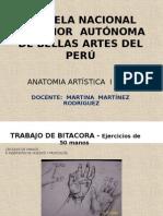 Anatomía Del Cuerpo Humano -Anatomía Artística i 2014