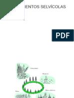 Selvicultura.pdf