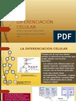 Diferenciacion Celular