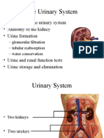 Anp2001 Week 4 Urinary Syst