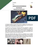 Guia Procesos de Fosilizacion