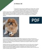 Article   Cachorros De Pekines (8)