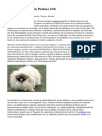 Article   Cachorros De Pekines (10)