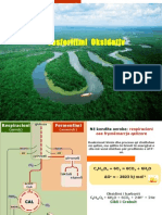 16 - Fosfolilimi Oksidativ