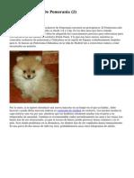 Article   Cachorros De Pomerania (2)