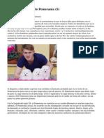 Article   Cachorros De Pomerania (5)