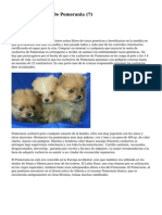 Article   Cachorros De Pomerania (7)