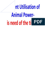 Efficient Utilisation of Animal Power