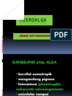 Overview Mikroalga