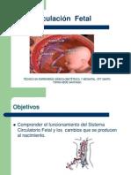 3 Circulación Sanguinea Fetal y Del RN