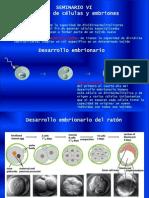 Clonado de células y embriones