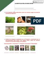 Cadenas Alimenticias y Relaciones Entre Organismos