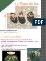 Efecto del tamaño y peso de la semilla de astrophytum Ornatum
