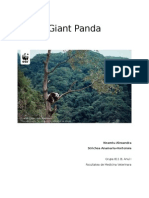 Giant Panda.doc