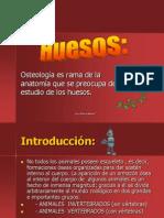 15-Huesos primera parte.pdf