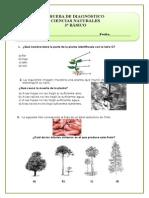 prueba de diagnostico ciencias terceros Básicos.doc