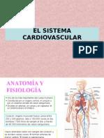 3b El Aparato Cardiovascular