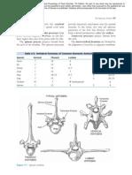 Skeletal System Reading Pp69-76