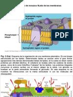 Tema 2.Membrana Plasmxtica