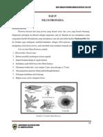 Protozoa
