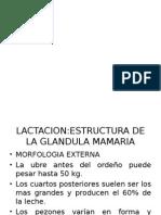 Fisilogia de La Glandula Mamaria