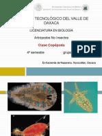 Genero Copepoda