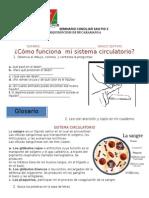 Sistema Circulatorio 1 Septimo