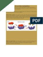 Mecanismos de Acción Enzimática