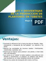 VENATAJAS Y DESVENTAJAS DE LA PRODUCCION DE PLANTONES EN TUBETES.pptx