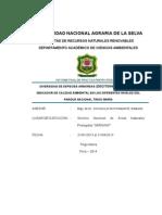 Informe Final Practica -Sustentado 5 Marzo