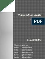 PLASMODIUM OVALEE