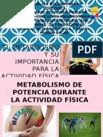 EL Metabolismo y Su Importancia Para La Actividad