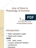 Anatomy of Penis & Physiology of Erection