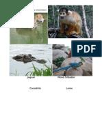 Animales de La Region Amazonas