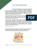 Apoptosis y Ciclo Celular 1