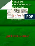 NIVELES DE ORGANIZACION DE LOS SERES VIVOS.ppt
