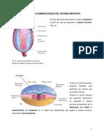Desarrollo embriológico del sistema nervioso.pdf