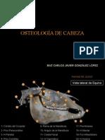 osteologia y artrologia de la cabeza