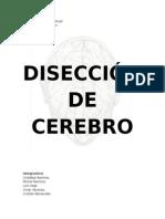Informe Disección Cerebro