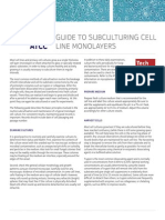 Guide to Subculturing in Cell Line Monolayers