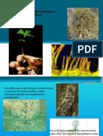 i.6. Simbiosis Microbiana