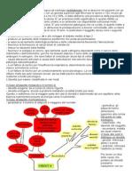 Patofisiologia dell'obesità (riassunto)