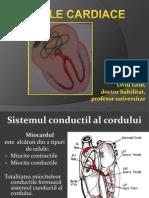 17Aritmiile cardiace.pdf