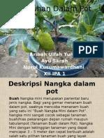 Tumbuhan Dalam Pot