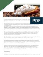 Mercado Do Cacau - História Do Cacau Como Cultivar e História Do Chocolate