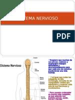 Clase 14 Neurona. Medula Espinal,Tallo Cerebral