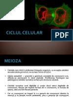 MEIOZA (1)